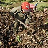 Hay un millón de niños trabajando en Colombia