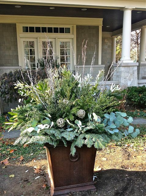 Winter Containers 2013: From the bottom up; silver fir, silver dollar eucalyptus, silver glittered vine balls, spruce, variegated oregano, skimmia, glittered birch stems