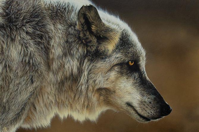 Hudozhnitsa-Cristina-Penescu.-Akril-Wolf.-24x36-dyuymov