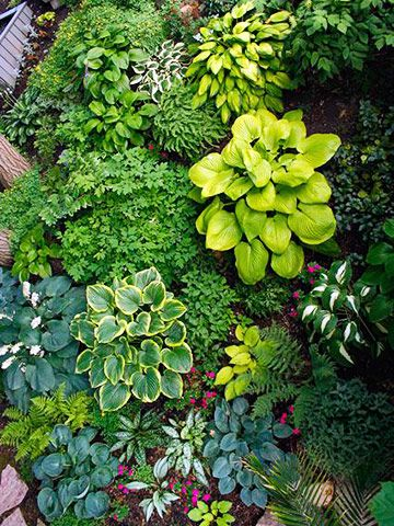 Consider planting a hosta bed next to the shed.