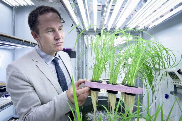 On the hunt for a variety of rice that grows without the use of excess, damaging fertilizer, scientists are trying to combat the excessive nitrogen runoff that is greatly contributing to atmospheric pollution. http://modernfarmer.com/2016/08/efficient-rice-crops/