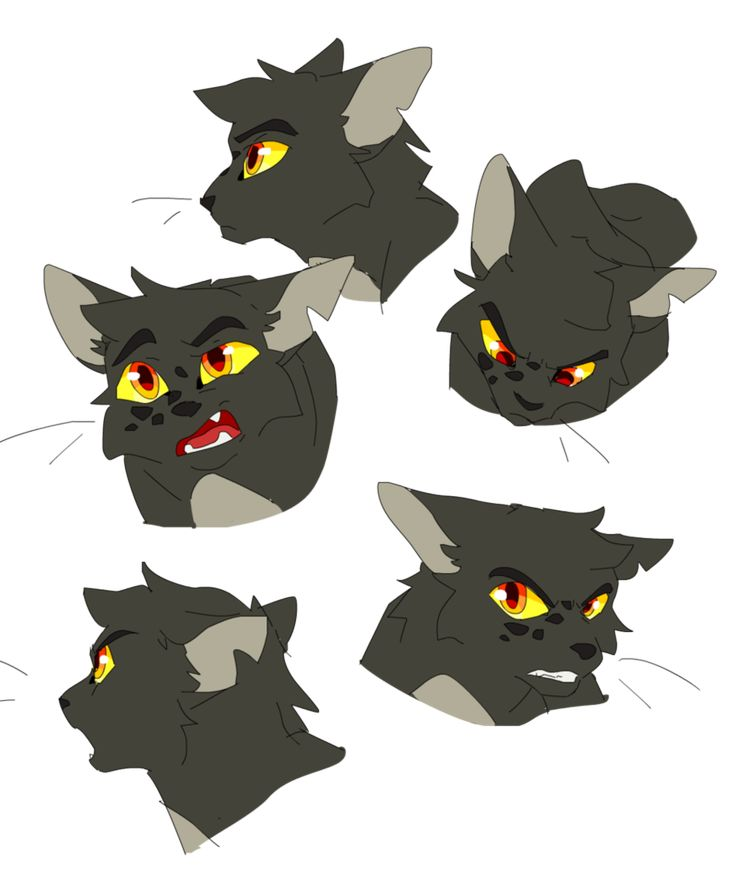 Warriors Dawn Of The Clans Characters: 1000+ Best Warrior Cats Images On Pinterest
