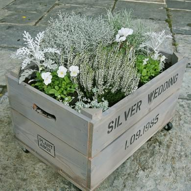 Silver Wedding personalised Anniversary Gift crate.  Use only silver plants!