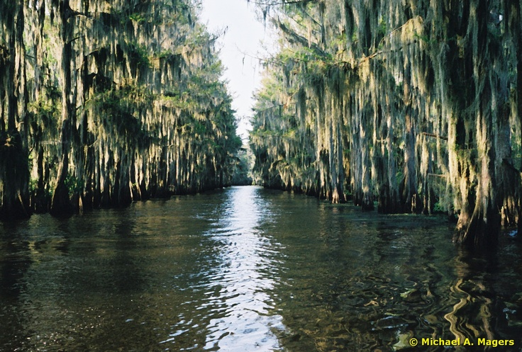 1000 images about caddo lake love this place on for Caddo lake fishing report