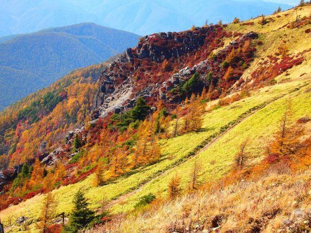 """【美ヶ原高原の紅葉情報】高原を目指す道中で紅葉を鑑賞できる。例年、10月上旬から中旬にかけて楽しむことができ、レンゲツツジ・シラカバ・カラマツなどが赤や黄に色づくことで、高原全体が秋一色となる。また、北アルプスや市街地を一望できる王ヶ頭や王ヶ鼻からは、下に紅葉する山々が一望できる。ウォーカープラスの""""紅葉名所2017""""では、全国約700ヶ所の紅葉情報を掲載 !"""