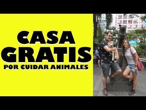 (7) Casa GRATIS por cuidar animales = Hacer House Sitting - YouTube
