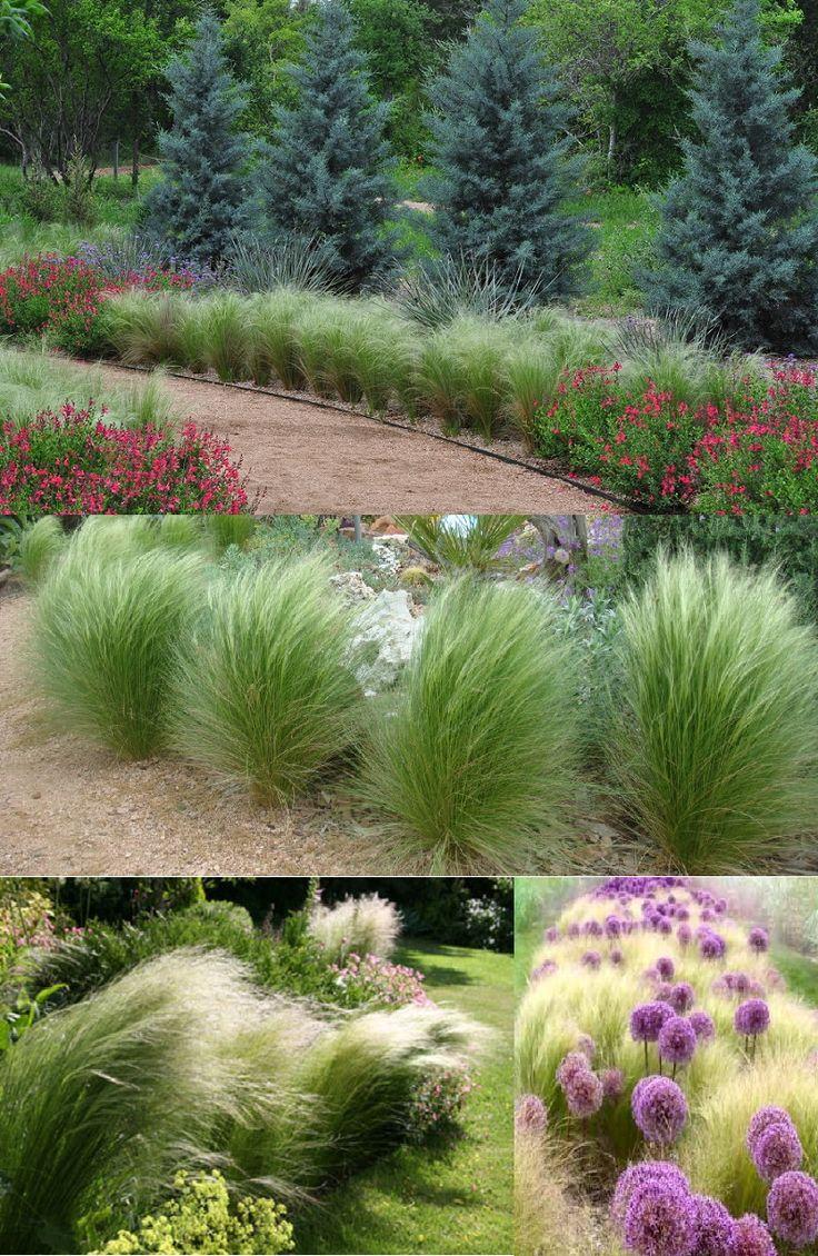 19 best marsh images on pinterest plants flower beds for Ornamental grasses for part sun
