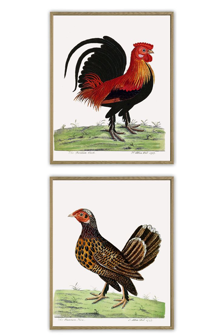 Chicken Birds Print Set Of 2 Large Wall Art Decor Kitchen Poster Bird Vintage Illustration Https Etsy Me Wall Art Decor Prints Wall Art Decor Bird Prints