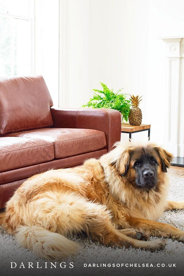 Fabric And Leather Sofas For Pet Lovers Modern Leather Sofa Leather Sofa Contemporary Leather Sofa