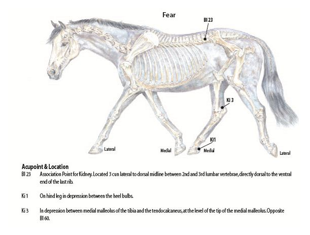 Acupressure Can Balance A Horses' Fear Level