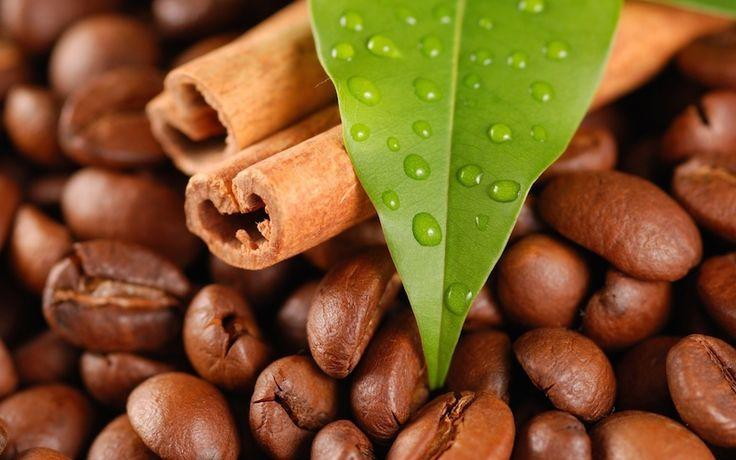 Jika kopi berasal dari biji kopi, cascara dari kulit ceri kopi serta selosoda berasal dari buah kopi, maka kawa daun berasal dari daun kopi. SAYA tak berhenti kagum dengan tanaman kopi. Dan rasa kagum ini bertambah setelah saya melakukan perjalanan ke Sumatera Barat untuk mengeksplorasi budaya minum…