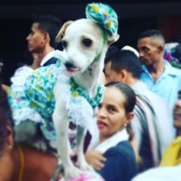 Personajes del Desfile de Piloneras. Festival Vallenato 2016