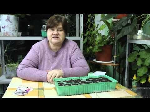 Как вырастить красавицу петунию? - YouTube
