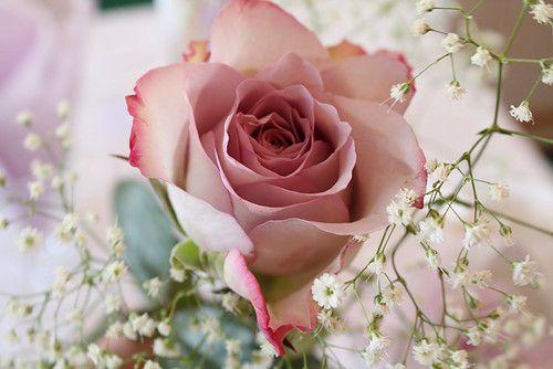 Pink Beauty Flower Single Rose