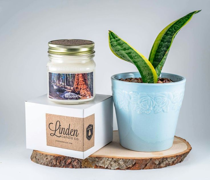 Sequoia National Park love.   Perfect addition to your home or gift for a travel friend!  #nationalpark #candle #lindencandleco #packaging #homedecor #rustic #travel #photography