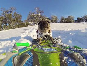 THEY are the most pawsome videos ever shot - welcome to the adventurous world of the GoPro dogs.