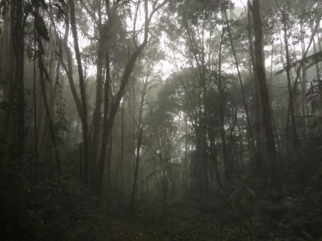 #Cloudforest at #Bellavista #Lodge, #Ecuador - through the #eyes of a #professional #photographer.