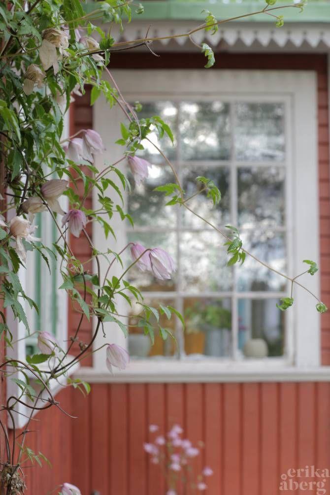 Veranda med snickarglädje. Klematis Pink Flamingo klättrar på en spaljé på fasaden. Foto: Erika Åberg #gamla #hus #trädgårdar #linoljefärg #byggnadsvård