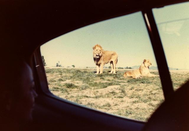 safari park #Bestinthecountry
