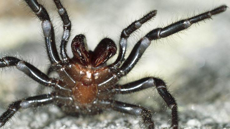 Der Spinnenbiss
