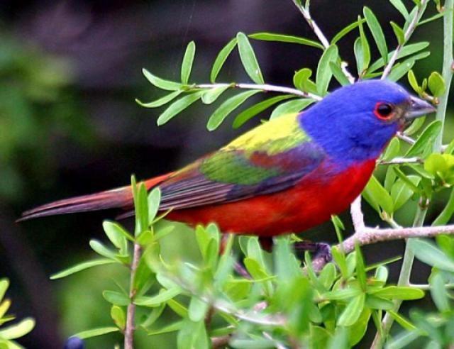 Most Beautiful Birds In The World / Las Aves Más Hermosas del Reino Animal   20Minutos (Listas)