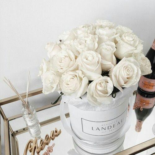 grafika flowers, rose, and white