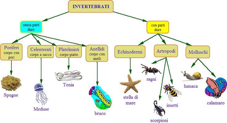 invertebrati - Cerca con Google