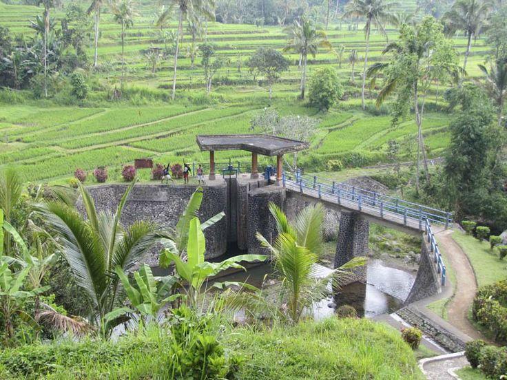 UNESCO protected Rice Fields at Jatiluwih, Bali