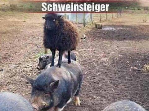 Schweinsteiger ist wieder fit...                                                                                                                                                                                 Mehr