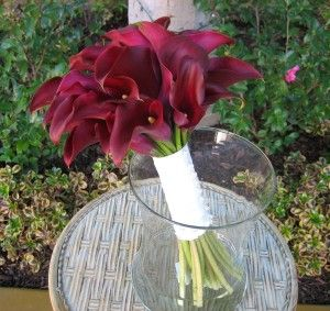 calla lilly (my favorite flower)