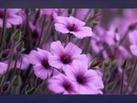 """Оказывая сильное влияние на правое полушарие мозга, фиолетовый цвет помогает восстанавливать нервную систему, нормализовать сон, исцеляет физические заболевания. Более подробно читать на сайте """"Изобилие в радости"""":   http://izobilie-v-radosti.ru/tajny-fioletovogo-tsveta/"""