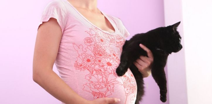La ginecobstetra, Yadiselyn Oropeza explica que la toxoplasmosis es una infección transmitida por un parásito protozoario microscópico (Toxoplasma Gondii), cuyo huésped definitivo son los felinos, y al ser contraída, pone en peligro la salud del futuro bebé. ...