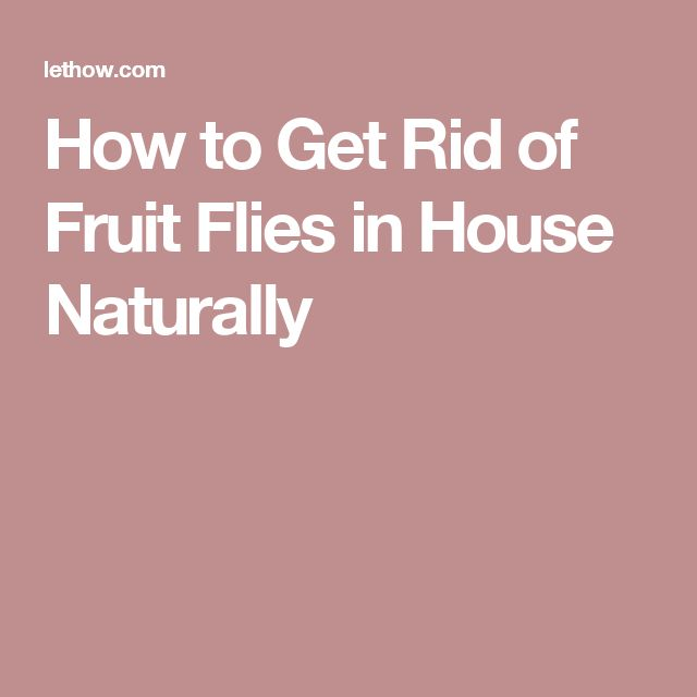 how to kill fruit flies in the house