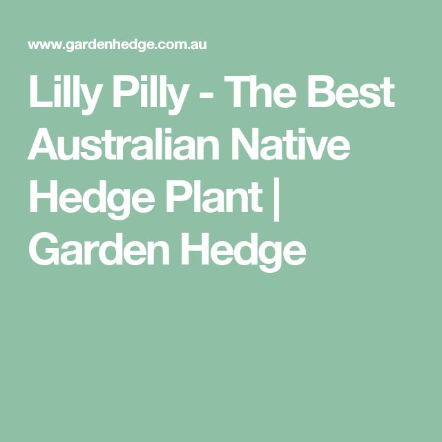 Lilly Pilly - The Best Australian Native Hedge Plant | Garden Hedge