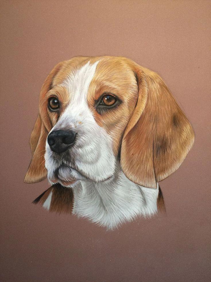 Beagle adult beagle art dog paintings beagle dog