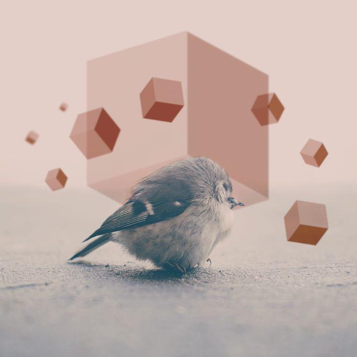 #geometría #pichon #muerte