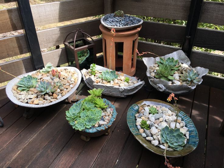 Handmade ceramic succulent gardens, many went to good homes over Christmas.
