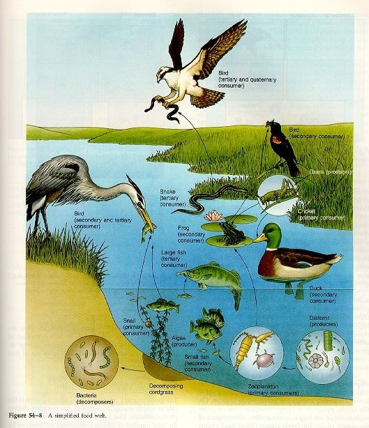11 Best Wetland Biome Project Table 1 Images On Pinterest Biome