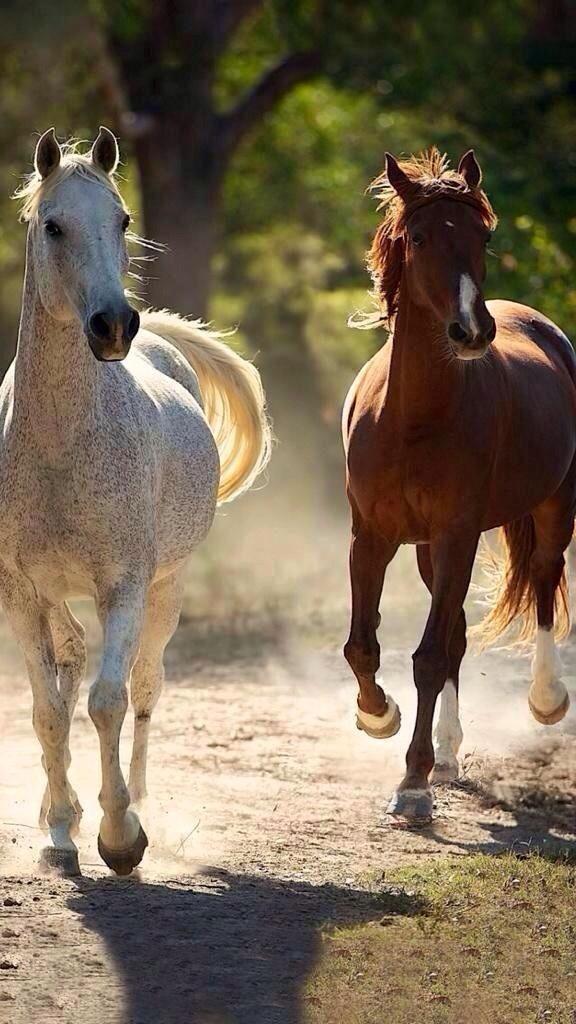 Horses                                                       …                                                                                                                                                                                 Más