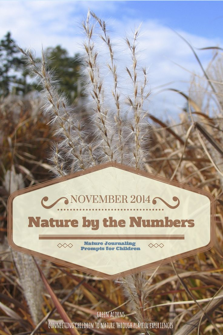 Nature by the Numbers | November 2014: monthly nature journal prompts for children