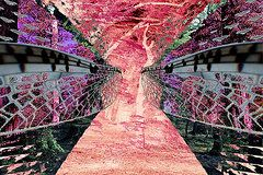 Featured Art - Mayflies in the Ballroom Rainforest  by Sarah  King