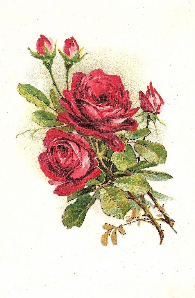 рисунки открытки с цветами чистом