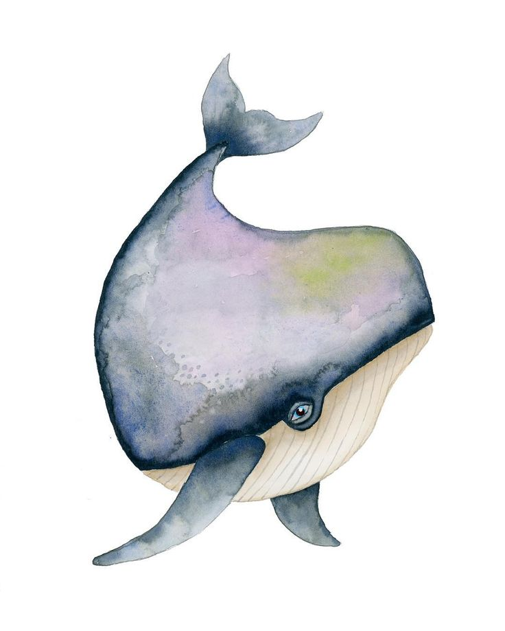 ~ Whale illustration ~  ANIMINIMALS collection.  @humlanbapan