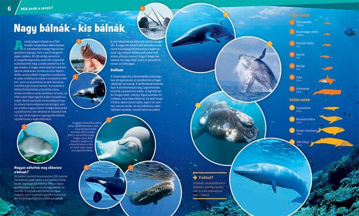 Mi MICSODA // Bálnák és delfinek - Szelíd óriások