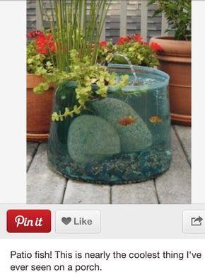 Fish on patio