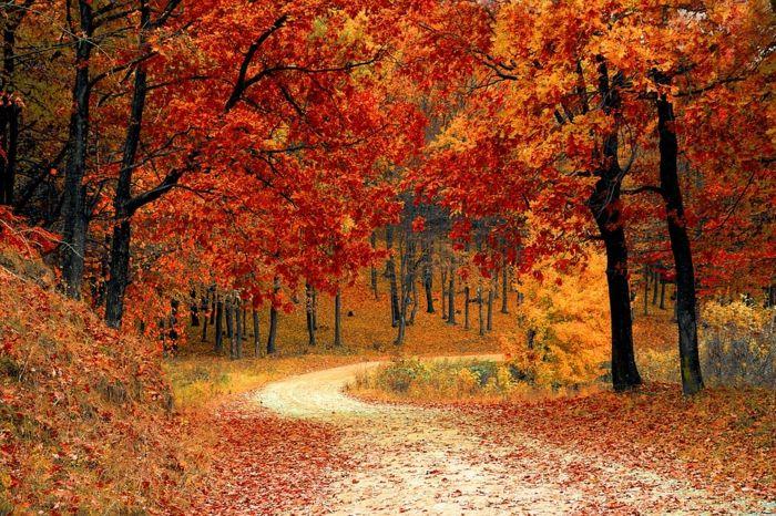 1001 Jolies Photos Pour Fond D Ecran De Paysage D Automne Paysage Automne Paysage Automnal Image Nature