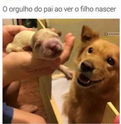<3 <3 <3  #cachorro #maedepet #maedecachorro #filhode4patas #petmeupet