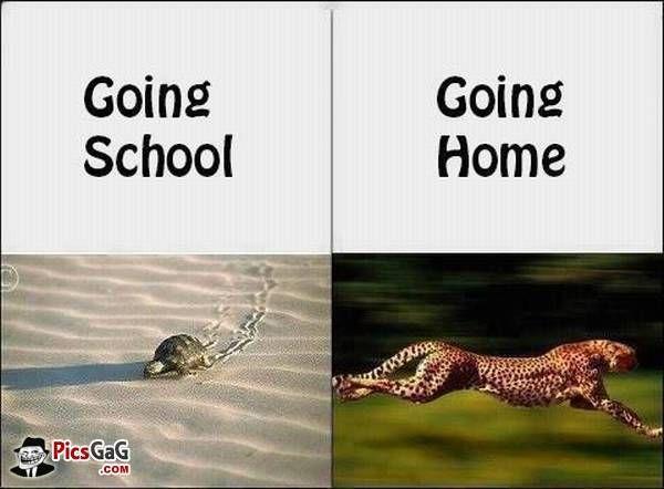 Going School, Going Home - http://www.memefunnies.com/going-school-going-home/