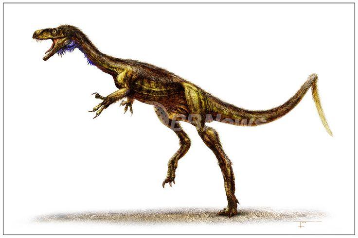 恐竜時代の幕開けに当たる2億3000万年前に生息していた小型肉食恐竜「エオドロマエウス(Eodromaeus)」。鼻先から尾の先までの体長は約1.2メートルで、体重はわずか4.5~7キロ(2011年1月13日撮影)。(c)AFP/Illustration by Todd Marshall ▼16Jul2014AFP|【特集】古代生物図鑑 http://www.afpbb.com/articles/-/3002031