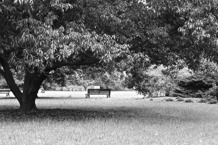 Lonely bench in Royal Botanic Gardens , Melbourne